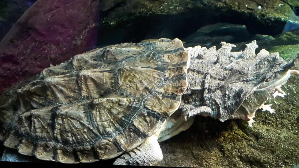 Schildkrötenausstellung