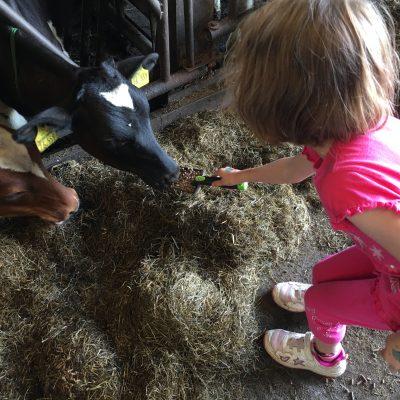 Ein Nachmittag auf dem Bauernhof