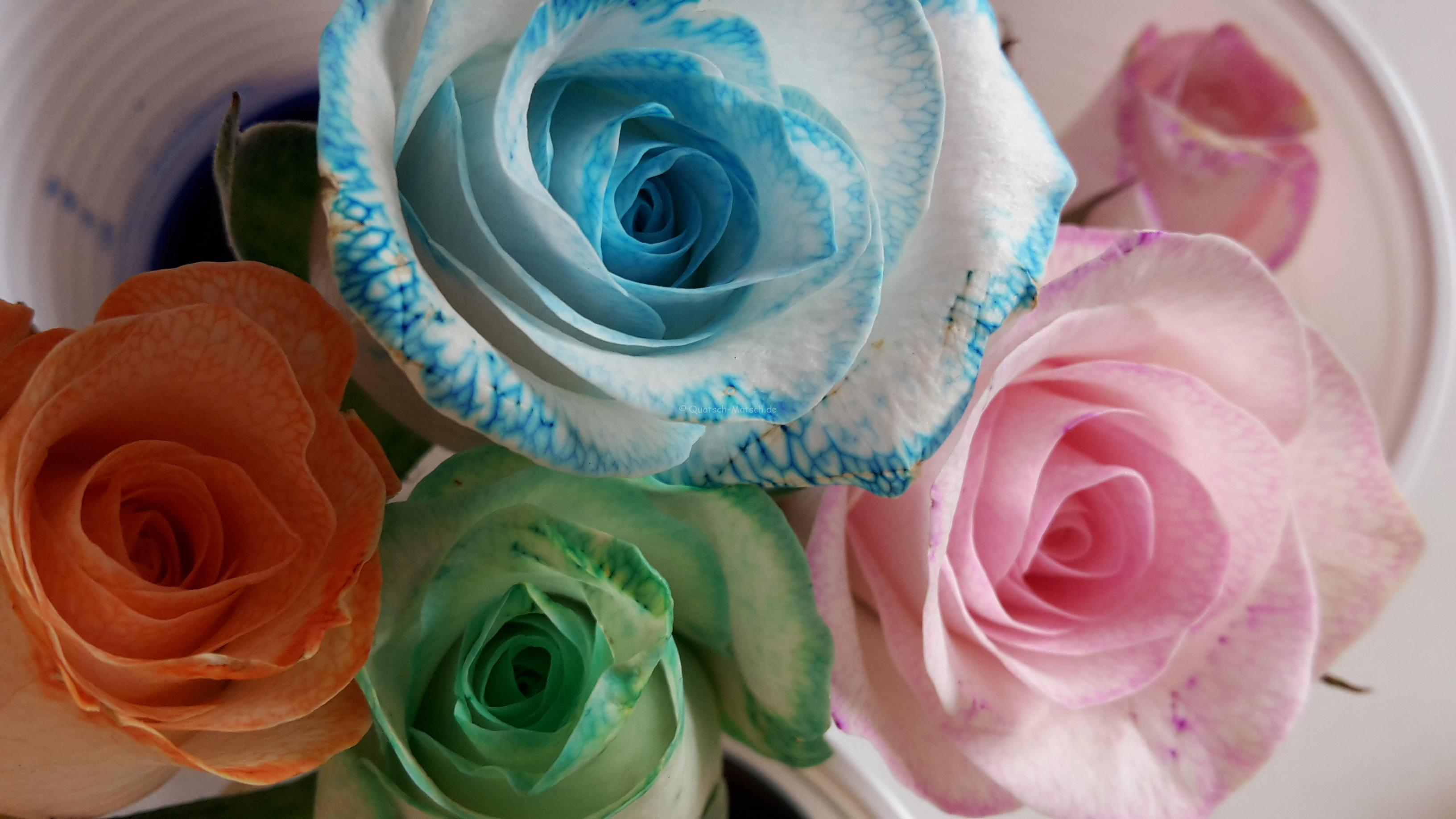 Blumen färben – Experiment mit Kindern